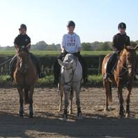 02 Pferde aus eigener Zucht