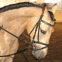 05 Pferde aus eigener Zucht