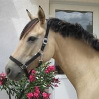 09 Pferde aus eigener Zucht