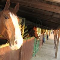 13 Pferdeboxen