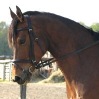 16Pferde aus eigener Zucht