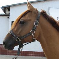 18Pferde aus eigener Zucht