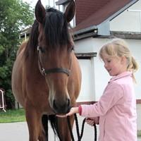03 Pferdevertrauen