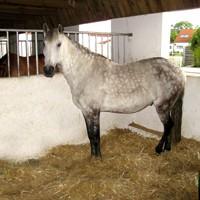 06 Pferdebox