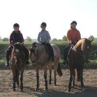 07 Pferde aus eigener Zucht