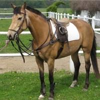 10 Pferde aus eigener Zucht