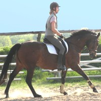 12 Pferde aus eigener Zucht