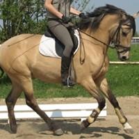14 Pferde aus eigener Zucht