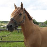 19 Pferde aus eigener Zucht
